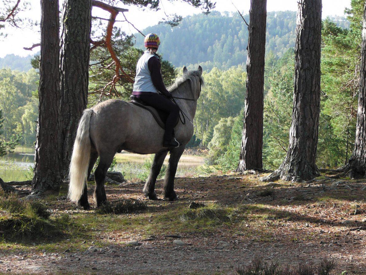 Pony Trekking, Rothiemurchus