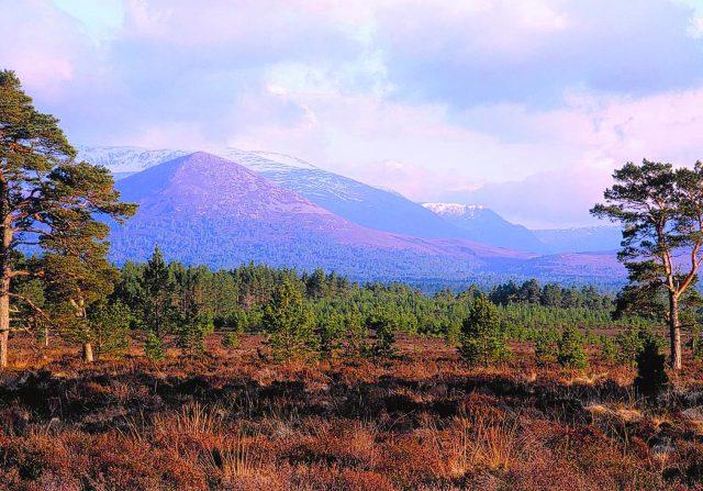 Rothiemurchus landscape panorama